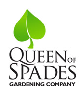Superbe Queen Of Spades Gardening Company
